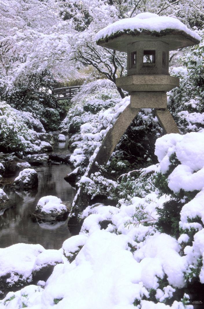 david-m-cobb-snow-capped-lanter-port-jap-gdn.jpg