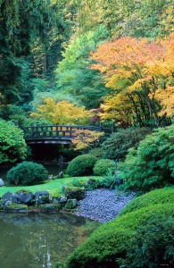 David M Cobb Portland Japanese garden in the fall.