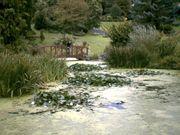 Avenham Park Japanese Garden. UK