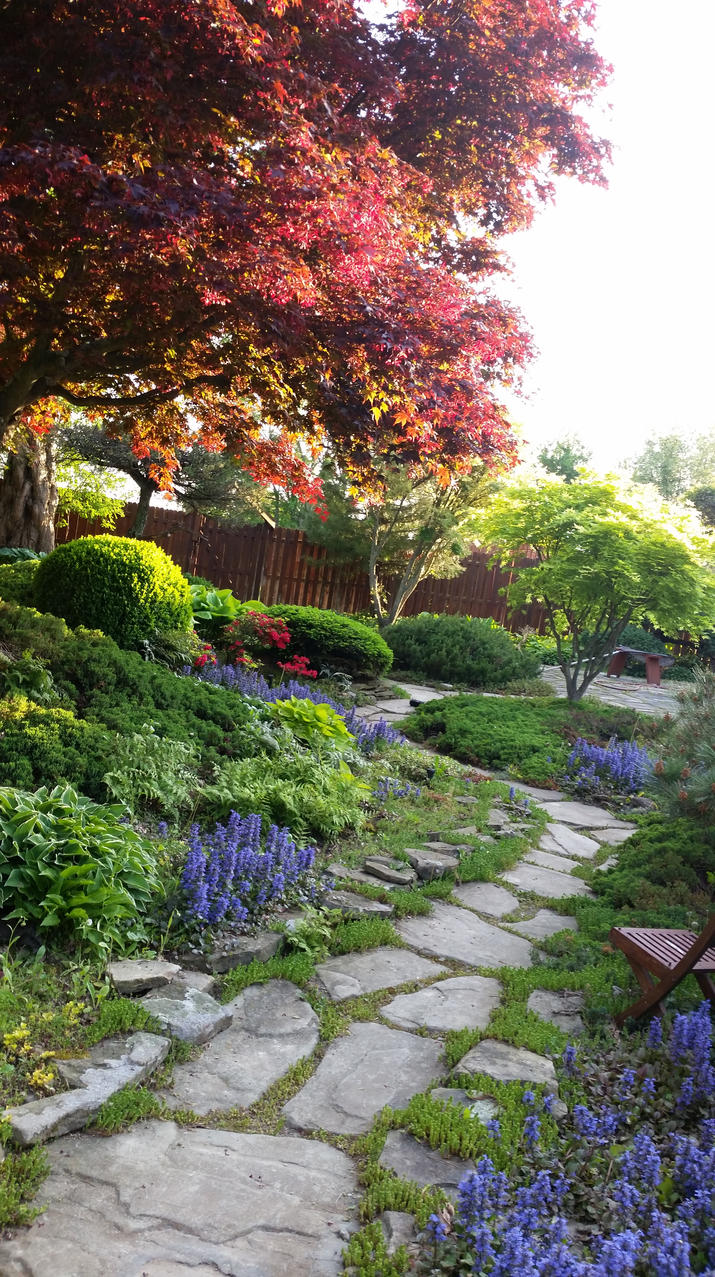 Traditional Pathways, A Multitude Of Japanese Trees And Shrubs And A Koi  Pond.